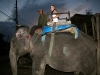 elephant-ride.jpg